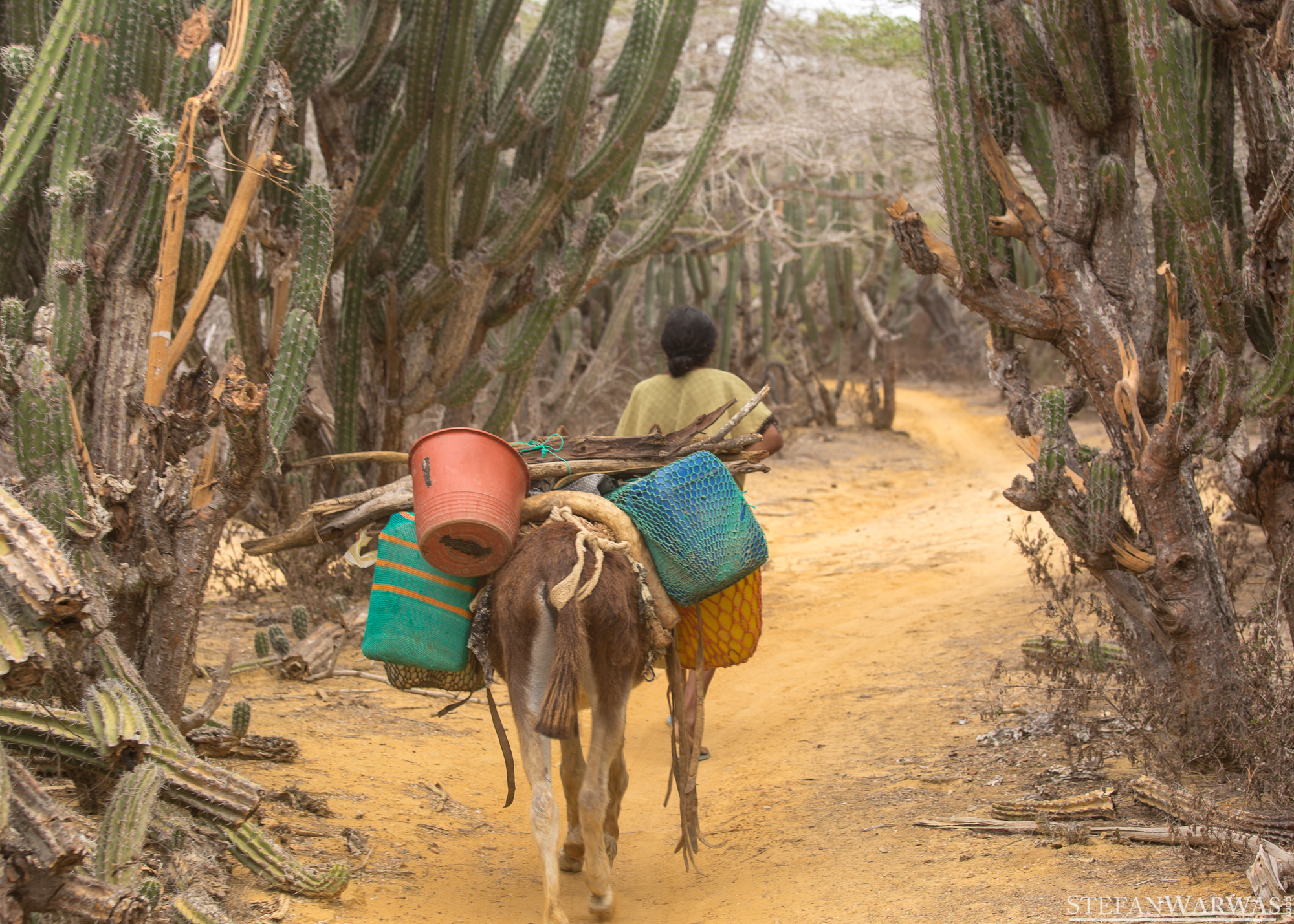 Wayuu transporting water by donkey.